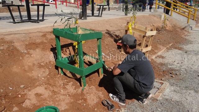 arborización (9)